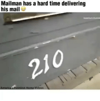 "Facts, Memes, and Videos: Mailman has a hard time delivering  his mail  210  Ame  ""funniest Home Videos ___________________________________________________ . Damndaniel DeadAss ThatShitHurted B Facts hellnawtothenawnawnaw ohdontdoit OhMyGod WTF ohshit WHODIDTHIS imdone REALLYBITCH NIGGASAINTSHIT NewYorkersBelike nochill NIGGASBELIKE BITCHESBELIKE blackpeoplebelike whitepeoplebelike BiggasBestBuys_ biggas_best_buys_autosales"