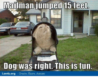 Memes, Jumped, and 🤖: Mailman jumped 15 feet  Dog was right. This is fun  Lawlz.org Create. Share. Amuse Miewahahaha.