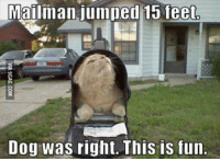 """9gag, Cats, and Http: Mailman jumped 15 feet  Dog was right. This is fun. <p>Cats can have fun too. / <a href=""""http://9gag.com/gag/a7709jx"""">via</a></p>"""
