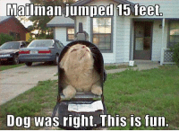 Dogs, Lol, and Memes: Mailman jumped 15 feet  Dog was right. This is fun LOL! :)