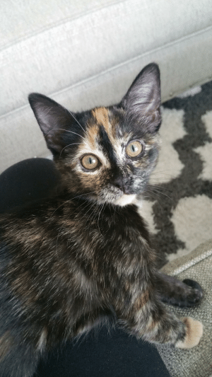 Majora is 3 months & 1 week old!: Majora is 3 months & 1 week old!