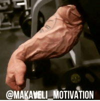 Gym, Love, and Memes: @MAKAMELL MOTIVATION ThankYouForBeingVascular Frank Mcgrath @frank_mcgrath78 motivation bodybuilding training workout gym GymLife GymRat gains muscular vascularity beast mass Muscle lifestyle love passion GoHardOrGoHome NoPainNoGain PushYourSelf believeinyourself grind hardwork NeverGiveUp StopBitching GetBig BeLegendary MakaveliMotivation