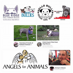 Please everyone vote for Sweetpea friends of Rutland animals!  Thank you!: MAKE A DIFFERENCE  RESCUE  BIGGIES  BLUE RIDGE BULLIES  OBULLY.ORG  LOVE  EST.05  BULL TERRIER RESCUE  Detroit  Save a life, enrich yours. Adopt Bull Teriert  Knick Knack Pittie Pack  Sweetpea Friends of  Rutland Animals  Dog Rescue  Nonprofit Organization  Animal Shelter  Mont Alto, Pennsylvania  ANGELS for ANIMALS  Michael's Mission  Nonprofit Organization  ULLY  REHAB  RESCUE Please everyone vote for Sweetpea friends of Rutland animals!  Thank you!