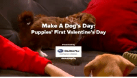 Subaru loves pets. See all the ways Subaru gives back to them here: Subaru.com/pets #MakeADogsDay: Make A Dog's Day:  Puppies' First Valentine's Day  Presented By  SUBARU  #Make ADogsDay Subaru loves pets. See all the ways Subaru gives back to them here: Subaru.com/pets #MakeADogsDay