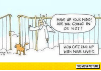 "Cats, Tumblr, and Blog: MAkE UP YOUR MIND  ARE YOu GOING IN  OR NOT  HOW CATS END UP  WITH NINE LIVES  THE META PICTURE <p><a href=""https://epicjohndoe.tumblr.com/post/174470729914/how-cats-end-up-with-nine-lives"" class=""tumblr_blog"">epicjohndoe</a>:</p>  <blockquote><p>How Cats End Up With Nine Lives</p></blockquote>"