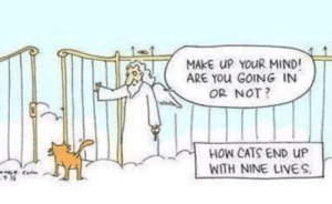 Probably true.: MAKE UP YOUR MIND!  ARE YOU GOING IN  OR NOT?  HOW CATS END UP  WITH NINE LIVES.  Cen Probably true.