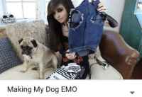 Animals, Dank, and Emo: Making My Dog EMO Animals in Unusual Places