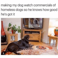 😂 Follow @shitheadsteve_ until he gets his original account back!: making my dog watch commercials of  homeless dogs so he knows how good  he's got it  Join A  A org  ASPCA 1-888 514 4443 😂 Follow @shitheadsteve_ until he gets his original account back!