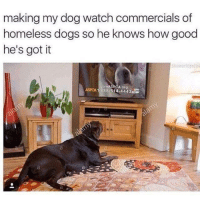 Dank, Dogs, and Homeless: making my dog watch commercials of  homeless dogs so he knows how good  he's got it  JoinA  A org  ASPCA 1.888.514 4443