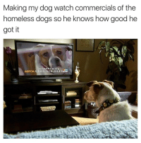 Funny, Aspca, and Bork: Making my dog watch commercials of the  homeless dogs so he knows how good he  got it  Join ASPCA org  ASPCA 1-888-514-4443 Hasn't borked since
