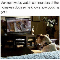 😂😂Savage AF - - - - - - - 420 memesdaily Relatable dank MarchMadness HoodJokes Hilarious Comedy HoodHumor ZeroChill Jokes Funny KanyeWest KimKardashian litasf KylieJenner JustinBieber Squad Crazy Omg Accurate Kardashians Epic bieber Weed TagSomeone hiphop trump rap drake: Making my dog watch commercials of the  homeless dogs so he knows how good he  got it  ASPCA 1 888-514 4443EG 😂😂Savage AF - - - - - - - 420 memesdaily Relatable dank MarchMadness HoodJokes Hilarious Comedy HoodHumor ZeroChill Jokes Funny KanyeWest KimKardashian litasf KylieJenner JustinBieber Squad Crazy Omg Accurate Kardashians Epic bieber Weed TagSomeone hiphop trump rap drake