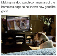 He has a new outlook on life now.: Making my dog watch commercials of the  homeless dogs so he knows how good he  got it  1.388.514.4443  ASPCA He has a new outlook on life now.
