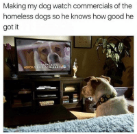 Blessed 🙏🐶: Making my dog watch commercials of the  homeless dogs so he knows how good he  got it  1.388.514.4443 EG  ASPCA Blessed 🙏🐶
