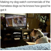 In the arrrrrrms offf an angel. But really go adopt: Making my dog watch commercials of the  homeless dogs so he knows how good he  got it  Join ASPCA org  ASPCA 1-888-514-4443 In the arrrrrrms offf an angel. But really go adopt