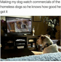Repost from @official_officerbaker CopHumor CopHumorLife Humor Funny Comedy Lol DogsOfInstagram Dogs DogsLife True: Making my dog watch commercials of the  homeless dogs so he knows how good he  got it  Join  ASPCA 1-888-514 44433 Repost from @official_officerbaker CopHumor CopHumorLife Humor Funny Comedy Lol DogsOfInstagram Dogs DogsLife True