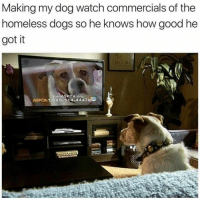 You gon' learn today! 🤣: Making my dog watch commercials of the  homeless dogs so he knows how good he  got it  Join ASPCA org  ASPCA 1-888-514-4443ES You gon' learn today! 🤣