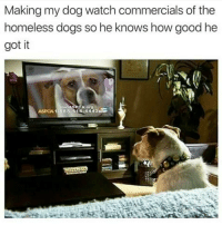 Dogs, Homeless, and Memes: Making my dog watch commercials of the  homeless dogs so he knows how good he  got it  RCA Org  ASPOA1 44433  1.888.514 That should teach 'em! 😂😂😂
