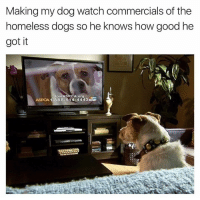 Aspca, Dog, and Org: Making my dog watch commercials of the  homeless dogs so he knows how good he  got it  Join ASRCA org  1-888-514-4443ES  ASPCA Hasn't borked since
