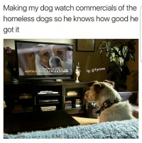 Dogs, Homeless, and Memes: Making my dog watch commercials of the  homeless dogs so he knows how good he  got it  lg: @Tyrone  Join ASRCA org  ASPCA 1-888-514 4443EE Hasn't Borked Since
