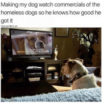 Af, Dogs, and Homeless: Making my dog watch commercials of the  homeless dogs so he knows how good he  got it  Featured @will ent  oin  PCA org  ASPCA 1-888-514-4443 😂😂Savage AF