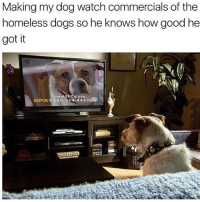 Dogs, Homeless, and Memes: Making my dog watch commercials of the  homeless dogs so he knows how good he  got it  Aorgo  ASPCA 1-888-514-44438 @boywithnojob is the goat of memes
