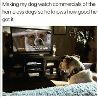 Chill, Dogs, and Funny: Making my dog watch commercials of the  homeless dogs so he knows how good he  got it  A oro  ASpo  88:51 4-444 3d Better chill Fido or you're on the streets pal😑😑