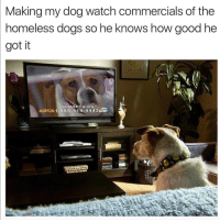 Dogs, Funny, and Memes: Making my dog watch commercials of the  nomeless dogs so he Knows how good he  got it  JoinASRCA org  ASPCA 1-888-514-4443 Funny Memes. Updated Daily! ⇢ FunnyJoke.tumblr.com 😀