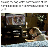 Memes, Aspca, and Good: Making my dog watch commercials of the  omeless doas So ne Knows how aood ne  got it  ASPCA 1-888-514-4443 He has it good