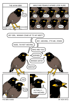 Yup. Yup. Right. Yup. [OC]: MALE AND FEMALE MYNAS LOOK ALIKE  THE MYNA BIRD  YUP  YUP  YUP  RIGHT  YUP  YUP  YUP  TRUE  HEY GIRL, WANNA COME UP TO MY NEST?  HEY, MICHAEL. IT'S ME, JONAH  DUDE, I'M NOT MICHAEL  WHO ARE YOU?  SOPHIE!!  WANNA MATE?  GIDDYUP  YUP  YUP  ACTUALLY...  I AM MICHAEL  THE BIRD GUIDE  BY NOA KATZ Yup. Yup. Right. Yup. [OC]