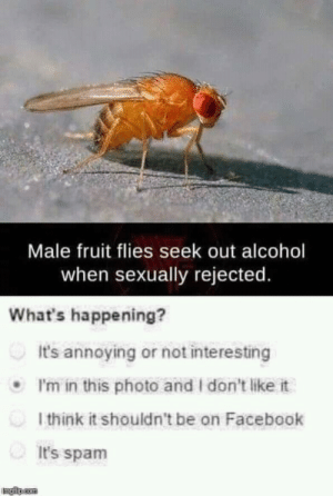 Facebook, Alcohol, and MeIRL: Male fruit flies seek out alcohol  when sexually rejected.  What's happening?  It's annoying or not interesting  I'm in this photo and I don't like it  l think it shouldn't be on Facebook  It's spam  - meirl