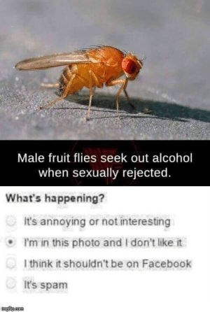 gay fruit fly