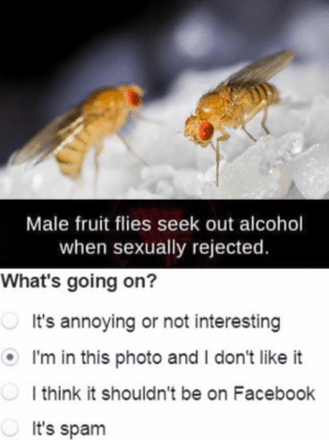 Dank, Facebook, and Alcohol: Male fruit flies seek out alcohol  when sexually rejected.  What's going on?  It's annoying or not interesting  I'm in this photo and I don't like it  l think it shouldn't be on Facebook  It's spam