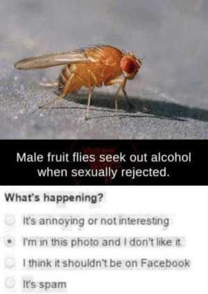 Dank, Facebook, and Memes: Male fruit flies seek out alcohol  when sexually rejected  What's happening?  It's annoying or not interesting  I'm in this photo and I don't like it  l think it shouldn't be on Facebook  It's spam But I can't fly by itsclassified_ MORE MEMES