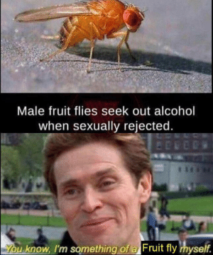 hahaha FUCK by Ouch-Man MORE MEMES: Male fruit flies seek out alcohol  when sexually rejected.  You know, I'm something of a Fruit fly myself. hahaha FUCK by Ouch-Man MORE MEMES