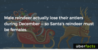 Facts, Instagram, and Memes: Male reindeer actually lose their antlers  during December  so Santa's reindeer must  be females.  uber  facts https://www.instagram.com/uberfacts/