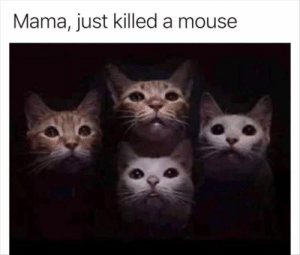 Funny Animal Memes Of The Day 25 Pics: Mama, just killed a mouse Funny Animal Memes Of The Day 25 Pics