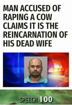 Wife, Reincarnation, and Cow: MAN ACCUSED OF  RAPING A COW  CLAIMS IT IS THE  REINCARNATION OF  HIS DEAD WIFE  SPEECİLİU