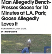 Wednesday, Wholesome, and March 14: Man Allegedly Bench-  Presses Goose for 10  Minutes at L.A. Park;  Goose Allegedly  Loves H  WEDNESDAY, MARCH 14, 2012 AT 12:30 PM.  BY SIMONE WILSON gooses can be wholesome to