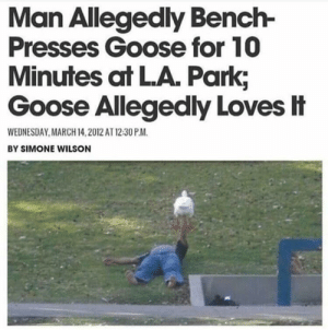 Wednesday, March 14, and Man: Man Allegedly Bench-  Presses Goose for 10  Minutes at LA. Park;  Goose Allegedly Loves忄  WEDNESDAY MARCH 14,2012 AT 12:30 P.M  BY SIMONE WILSON Just a couple of guys being dudes