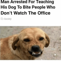 Memes, The Office, and Office: Man Arrested For Teaching  His Dog To Bite People Who  Don't Watch The Office  Society do what
