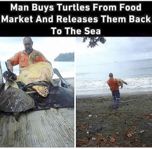 Food, Memes, and Tumblr: Man Buys Turtles From Food  Market And Releases Them Back  To The Sea  95 positive-memes:  what a breathtaking person