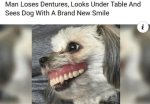 laughoutloud-club:  Today's best news…: Man Loses Dentures, Looks Under Table And  Sees Dog With A Brand New Smile laughoutloud-club:  Today's best news…