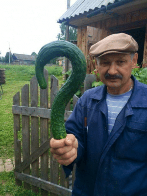 Man posing with a question mark shaped cucumber: Man posing with a question mark shaped cucumber