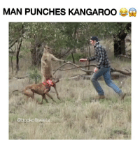 this man squared up with a kangaroo.. the kangaroo was confused af after he hit his ass 💀💀💀 @trapgodbart . via @bookoftweets: MAN PUNCHES KANGAROO  Q  @book oftweets this man squared up with a kangaroo.. the kangaroo was confused af after he hit his ass 💀💀💀 @trapgodbart . via @bookoftweets