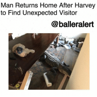 "Man Returns Home After Harvey to Find Unexpected Visitor-blogged by @thereal__bee ⠀⠀⠀⠀⠀⠀⠀⠀⠀ ⠀⠀ After returning to his flooded home in Texas, one man found a little surprise waiting for him inside. ⠀⠀⠀⠀⠀⠀⠀⠀⠀ ⠀⠀ When BrianFoster returned home on Friday after HurricaneHarvey, he found a 9-foot-long alligator hiding underneath his dining room table, reports HuffPost. ⠀⠀⠀⠀⠀⠀⠀⠀⠀ ⠀⠀ Foster reported the matter to police officers and wildlife officials. Officials were able to capture the reptile. ⠀⠀⠀⠀⠀⠀⠀⠀⠀ ⠀⠀ The Harris County Precinct 4 Constable's Office reported on Twitter that the animal would be ""delivered back into his natural habitat soon."" ⠀⠀⠀⠀⠀⠀⠀⠀⠀ ⠀⠀ Texas Parks and Wildlife officials announced on Tuesday that alligators could be found in ""areas where they aren't normally observed"" due to the storm. ⠀⠀⠀⠀⠀⠀⠀⠀⠀ ⠀⠀ ""Alligators are wary of people but keep your distance,"" the service said. ""Never approach, harass or feed an alligator. When water levels recede, the alligator will likely disappear as well."": Man Returns Home After Harvey  to Find Unexpected Visitor  @balleralert Man Returns Home After Harvey to Find Unexpected Visitor-blogged by @thereal__bee ⠀⠀⠀⠀⠀⠀⠀⠀⠀ ⠀⠀ After returning to his flooded home in Texas, one man found a little surprise waiting for him inside. ⠀⠀⠀⠀⠀⠀⠀⠀⠀ ⠀⠀ When BrianFoster returned home on Friday after HurricaneHarvey, he found a 9-foot-long alligator hiding underneath his dining room table, reports HuffPost. ⠀⠀⠀⠀⠀⠀⠀⠀⠀ ⠀⠀ Foster reported the matter to police officers and wildlife officials. Officials were able to capture the reptile. ⠀⠀⠀⠀⠀⠀⠀⠀⠀ ⠀⠀ The Harris County Precinct 4 Constable's Office reported on Twitter that the animal would be ""delivered back into his natural habitat soon."" ⠀⠀⠀⠀⠀⠀⠀⠀⠀ ⠀⠀ Texas Parks and Wildlife officials announced on Tuesday that alligators could be found in ""areas where they aren't normally observed"" due to the storm. ⠀⠀⠀⠀⠀⠀⠀⠀⠀ ⠀⠀ ""Alligators are wary of people but keep your distance,"" the service said. ""Never approach, harass or feed an alligator. When water levels recede, the alligator will likely disappear as well."""