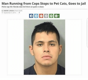 Be Like, Cats, and Jail: Man Running from Cops Stops to Pet Cats, Goes to Jail  Police say the Fiorida man led them on quite a chase  By SHERRI LONON (Patch Sta  September 3. 2014  P Redditor criminals be like.