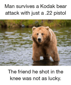 Always run with a friend.: Man  survives a Kodak bear  attack with just a .22 pistol  The friend he shot in the  knee was not as lucky Always run with a friend.