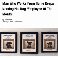 """Memes, Home, and Boy: Man Who Works From Home Keeps  Naming His Dog """"Employee Of The  Month'  By Julia Banim  January 2, 2019 3 min read  Accuride  Accuride  Accuride  Employee Of The Quarter  02-2016  Empioyee Of The Quarter  03-2016  Employee Of The Quarter  04-2018  MEEKA  MEEKA  MEEKA Atta boy!!"""