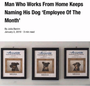 Home, Dog, and Who: Man Who Works From Home Keeps  Naming His Dog 'Employee Of The  Month'  By Julia Banim  January 2, 2019  3 min read  Emplsyne Of The Quarte  MEEKA  MEEKA  MEEKA What a hard worker!