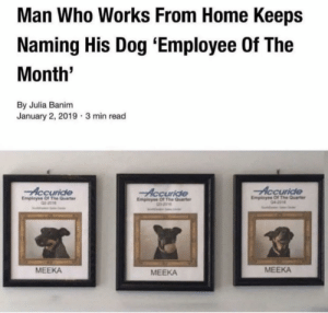 Home, Dog, and Who: Man Who Works From Home Keeps  Naming His Dog 'Employee Of The  Month  By Julia Banim  January 2, 2019 3 min read  Accuride  Accuride  Employee Of The Quarer  Accuride  Employse Of The Quarter  Empleyee Of The Quarte  0-2016  MEEKA  MEEKA  MEEKA What a hard worker!